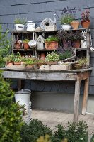 Pots of lavender and sedums on rustic wooden table against house façade