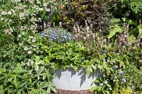 Flowering plants planted in zinc tub in summer garden