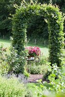Climber-covered arched trellis in garden