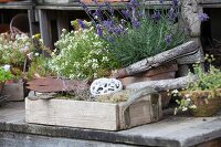 Flowering lavender, vintage gardening implements and wooden crate on garden table