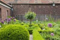 Knot garden with clipped hedges and flowering alliums outside brick farmhouse