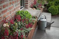 Zinc watering can next to raised bed with rusty metal surround