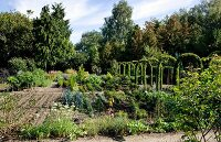 Rows of plants in vegetable patch with rose arches to one side surrounded by woodland