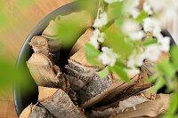 Bucket of logs seen through blurred leafy branch