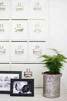 Black and white family photo and house plant in metal pot in front of apothecary cabinet