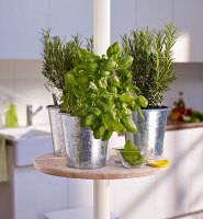 Potted herbs on round minibar on telescopic pole in kitchen