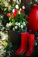 Red wellingtons in front of planter of white & red tulips and white violas in garden
