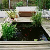 Wooden deck encircling planted pond with goldfish