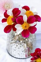 Red and white dahlias in mercury glass vase