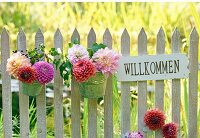 Dahlias in metal pots and welcome sign on picket fence; meadow in background