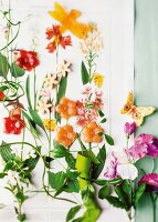 Flower-shaped sweets and botanical drawings decorating wall