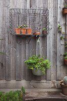 Plant pots in wire basket on board wall of courtyard