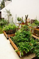 Vegetable beds in wooden crates on terrace