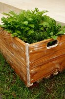 Vegetable bed in wooden crate in garden
