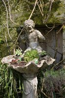 Old birdbath with clam shell and cherub planted with cacti and succulents