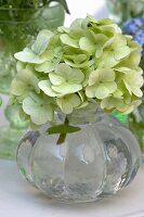 Glass vase of white hydrangeas (close-up)