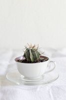 Cactus planted in old coffee cup on white linen tablecloth
