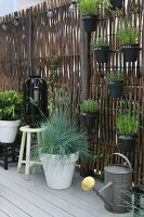 Herbs in black pots mounted on screen and plants on floor and on stools