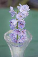 Pale lilac delphinium flower spike arranged in glass vase