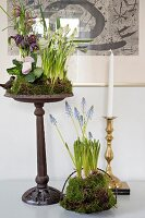 Spring flowers arranged with moss in planters
