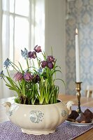 Snake's head fritillaries and grape hyacinths planted in soup tureen