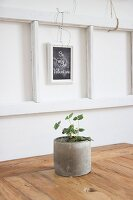 Strawberry plant in concrete pot in front of St. Valentine's Day greeting on blackboard hung on wall