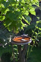 Birdbath with bird figurine on tree trunk