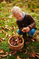 Young boy collecting conkers in basket