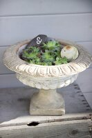 Succulents planted in antique stone urn decorated with engraved pebble