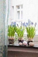 Grape hyacinths on a window sill decorated with eggs, vintage style
