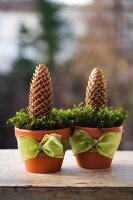 Two terracotta pots decorated with green ribbons, moss and pine cones