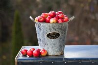 Metal bucket of red apples