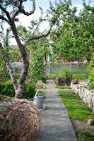 Garden path flanked by fruit trees and low stone wall