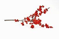 Sprig of red winter berries