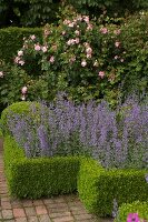 Beds edged with clipped box hedges and brick-paved path in front of tall rose bush