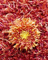 Orange flower on orange woollen rug