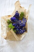 Purple grape hyacinths wrapped in vintage paper