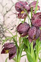 Snake's head fritillaries (close-up)