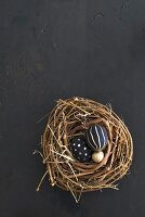 Black and gold eggs in willow nest