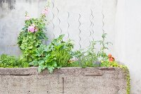 Various herbs, garden plants and flowering plants in concrete trough