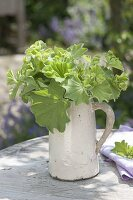 Bouquet made of Alchemilla mollis (lady's mantle) in a jug