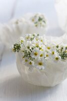 Fairy primroses in small, wax bowls