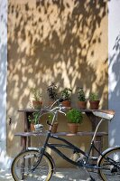 Bicycle in front of rustic, wooden plant staging against sunlit house facade