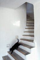 Cat running down masonry winding staircase in country house