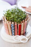 Pot of cress decorated with clothes pegs