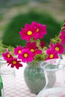 Vase of cosmos on table outdoors