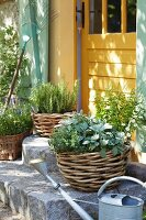 Mediterranean herbs in planters on stone steps in front of a yellow wooden door