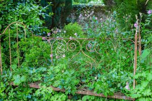 Ornate, metal bed frame overgrown with plants in summery garden