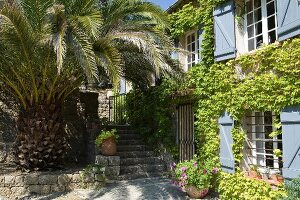 Huge palm tree shading stone steps outside vine-covered Provençal guest house