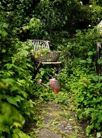 Basket on wooden folding chair and vintage watering can in densely planted garden